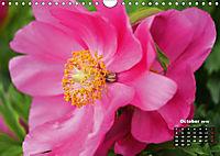 Peony Rose Without Thorns (Wall Calendar 2018 DIN A4 Landscape) - Produktdetailbild 10