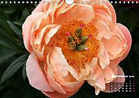 Peony Rose Without Thorns (Wall Calendar 2018 DIN A4 Landscape) - Produktdetailbild 9