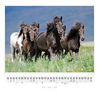 Ponys 2018 - Produktdetailbild 11