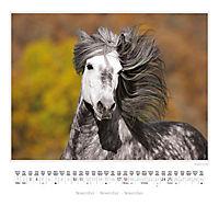 Ponys 2018 - Produktdetailbild 6