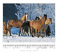 Ponys 2018 - Produktdetailbild 7