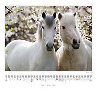 Ponys 2018 - Produktdetailbild 8