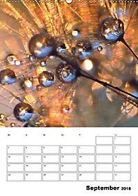 Pusteblumentraum - Dreams of Dandelion (Wandkalender 2018 DIN A2 hoch) - Produktdetailbild 9