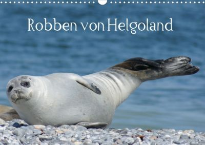 Robben von Helgoland (Posterbuch, DIN A4 quer), Kattobello