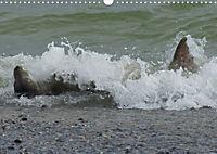 Robben von Helgoland (Posterbuch, DIN A4 quer) - Produktdetailbild 10