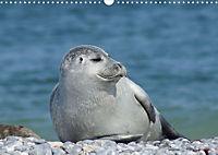 Robben von Helgoland (Posterbuch, DIN A4 quer) - Produktdetailbild 2