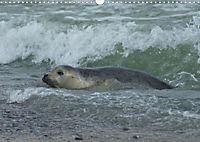 Robben von Helgoland (Posterbuch, DIN A4 quer) - Produktdetailbild 3