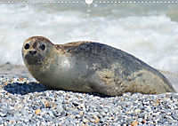 Robben von Helgoland (Posterbuch, DIN A4 quer) - Produktdetailbild 4