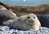 Robben von Helgoland (Posterbuch, DIN A4 quer) - Produktdetailbild 12