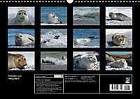 Robben von Helgoland (Posterbuch, DIN A4 quer) - Produktdetailbild 13