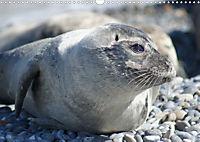 Robben von Helgoland (Posterbuch, DIN A4 quer) - Produktdetailbild 11