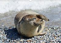 Robben von Helgoland (Posterbuch, DIN A4 quer) - Produktdetailbild 8