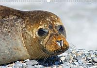 Robben von Helgoland (Posterbuch, DIN A4 quer) - Produktdetailbild 9