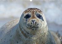 Robben von Helgoland (Posterbuch, DIN A4 quer) - Produktdetailbild 1
