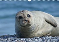 Robben von Helgoland (Posterbuch, DIN A4 quer) - Produktdetailbild 5