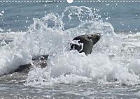 Robben von Helgoland (Posterbuch, DIN A4 quer) - Produktdetailbild 6
