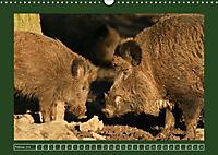 Schweinkram - Die Wildschweine sind los (Wandkalender 2018 DIN A3 quer) - Produktdetailbild 2