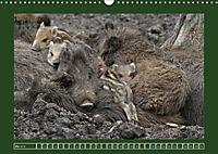 Schweinkram - Die Wildschweine sind los (Wandkalender 2018 DIN A3 quer) - Produktdetailbild 5