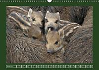 Schweinkram - Die Wildschweine sind los (Wandkalender 2018 DIN A3 quer) - Produktdetailbild 1