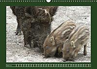 Schweinkram - Die Wildschweine sind los (Wandkalender 2018 DIN A3 quer) - Produktdetailbild 4