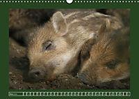 Schweinkram - Die Wildschweine sind los (Wandkalender 2018 DIN A3 quer) - Produktdetailbild 3