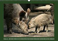 Schweinkram - Die Wildschweine sind los (Wandkalender 2018 DIN A3 quer) - Produktdetailbild 10