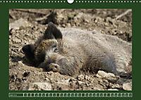 Schweinkram - Die Wildschweine sind los (Wandkalender 2018 DIN A3 quer) - Produktdetailbild 6