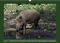 Schweinkram - Die Wildschweine sind los (Wandkalender 2018 DIN A3 quer) - Produktdetailbild 8