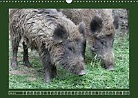 Schweinkram - Die Wildschweine sind los (Wandkalender 2018 DIN A3 quer) - Produktdetailbild 7