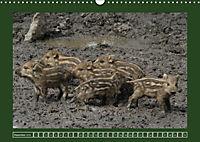 Schweinkram - Die Wildschweine sind los (Wandkalender 2018 DIN A3 quer) - Produktdetailbild 12