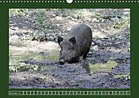 Schweinkram - Die Wildschweine sind los (Wandkalender 2018 DIN A3 quer) - Produktdetailbild 11
