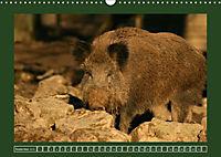 Schweinkram - Die Wildschweine sind los (Wandkalender 2018 DIN A3 quer) - Produktdetailbild 9