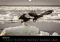Seeadler - Könige der Lüfte (Wandkalender 2018 DIN A3 quer) - Produktdetailbild 1