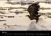 Seeadler - Könige der Lüfte (Wandkalender 2018 DIN A3 quer) - Produktdetailbild 4