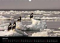 Seeadler - Könige der Lüfte (Wandkalender 2018 DIN A3 quer) - Produktdetailbild 6