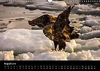 Seeadler - Könige der Lüfte (Wandkalender 2018 DIN A3 quer) - Produktdetailbild 8