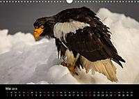 Seeadler - Könige der Lüfte (Wandkalender 2018 DIN A3 quer) - Produktdetailbild 5