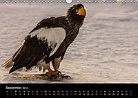 Seeadler - Könige der Lüfte (Wandkalender 2018 DIN A3 quer) - Produktdetailbild 9