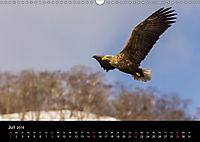 Seeadler - Könige der Lüfte (Wandkalender 2018 DIN A3 quer) - Produktdetailbild 7