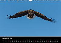 Seeadler - Könige der Lüfte (Wandkalender 2018 DIN A3 quer) - Produktdetailbild 11