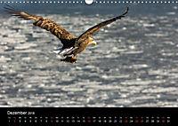 Seeadler - Könige der Lüfte (Wandkalender 2018 DIN A3 quer) - Produktdetailbild 12