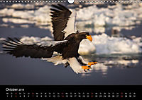 Seeadler - Könige der Lüfte (Wandkalender 2018 DIN A3 quer) - Produktdetailbild 10