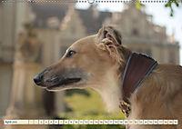 Silken Windsprite - Schöne Schlösser und edle Windhunde (Wandkalender 2018 DIN A2 quer) - Produktdetailbild 4