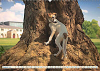 Silken Windsprite - Schöne Schlösser und edle Windhunde (Wandkalender 2018 DIN A2 quer) - Produktdetailbild 8