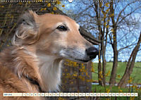 Silken Windsprite - Schöne Schlösser und edle Windhunde (Wandkalender 2018 DIN A2 quer) - Produktdetailbild 7