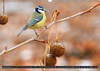 Singvögel (Wandkalender 2018 DIN A3 quer) - Produktdetailbild 12