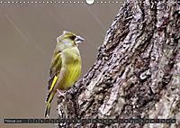 Singvögel (Wandkalender 2018 DIN A3 quer) - Produktdetailbild 2