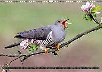 Singvögel (Wandkalender 2018 DIN A3 quer) - Produktdetailbild 4