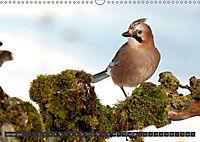 Singvögel (Wandkalender 2018 DIN A3 quer) - Produktdetailbild 1