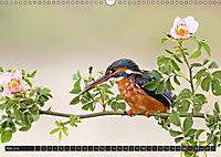 Singvögel (Wandkalender 2018 DIN A3 quer) - Produktdetailbild 5